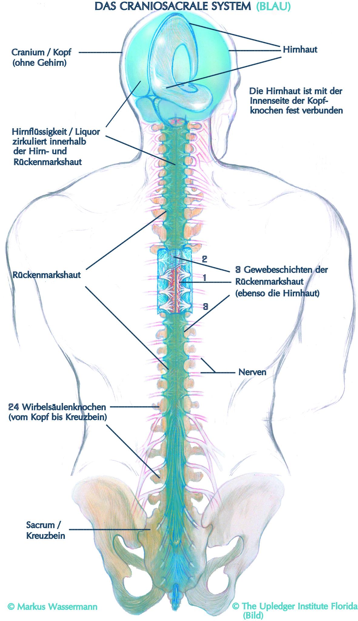 Cranio-Sacral-Therapie, Markus Wassermann, Wien, Craniosacral Therapeut